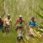 נוף ירוק בטיול מאורגן למדגסקר