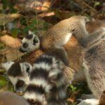 משפחת למורים בטיול למדגסקר