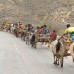 שיירה בטיול בתפירה אישית למדגסקר