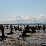 טיולים בהתאמה אישית למדגסקר