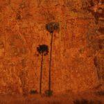 עץ בטיול בהתאמה אישית למדגסקר