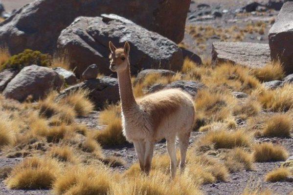 טיול לדרום אמריקה – פרו וצ'ילה