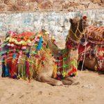 טבילה בגנגס בטיול מאורגן להודו
