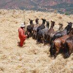 סוסים בטיול למרוקו
