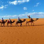 גמלים במדבר בטיול מאורגן למרוקו