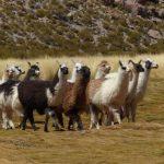 טיול לדרום אמריקה - פרו וצ'ילה
