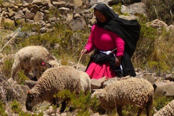 כבשים מאת: חן כץ מדריך טיולים