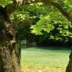 עצים ונחל בטיול משפחות ביוון