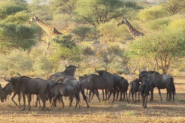 חיי הבר באתושה, נמיביה – שמורת טבע בגודל מדינה
