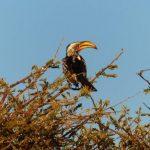 צפייה בתוכי בטיול מאורגן בנמיביה