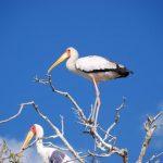 צפייה עופות בטיול מאורגן בנמיביה