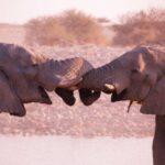 טיול מאורגן בנמיביה עם צפייה בפילים