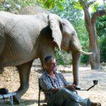 צפייה בפילים בטיול לזימבבואה