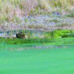 צפייה בתנין בטיול לזימבבואה