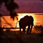 טיול לזימבבואה - צפייה בפיל בשקיעה