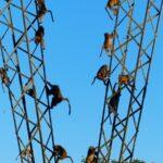 צפייה בקופים בטיול מאורגן טיול לזימבבואה