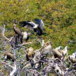 עופות דורסים בזימבבואה - טיול בנהיגה עצמית